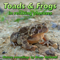 Toads and Frogs sounds