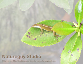 Green Anole Windows background