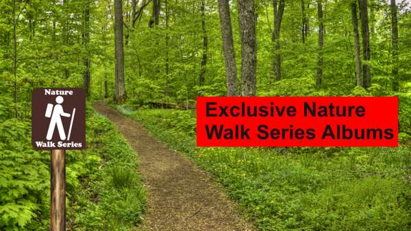 Our Exclusive Walk Series Albums Take You On Virtual Nature Hikes on Real Trails