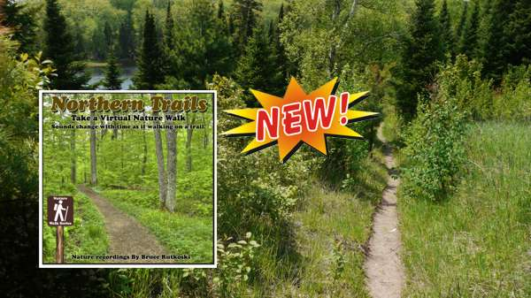 New Album: Northern Trails. Take a Virtual Walk to the Sounds of Spring Birds