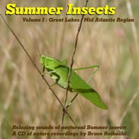 Summer Insects Album