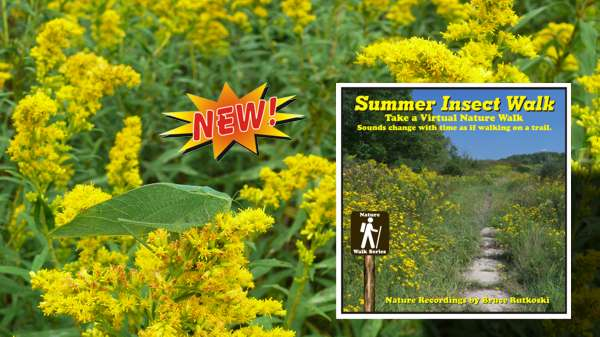 New Album: Summer Insect Walk. Take A Night Walk Enjoying The Sounds Of Insects.